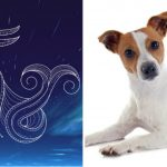 What Breed Would You Be if You Were a Dog? The Zodiac Criteria!